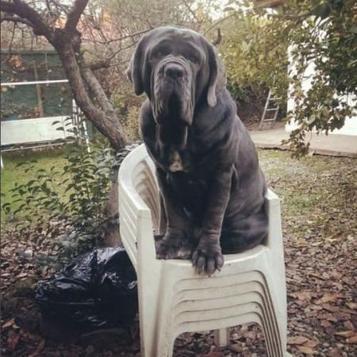 大きすぎる犬の画像(18枚目)