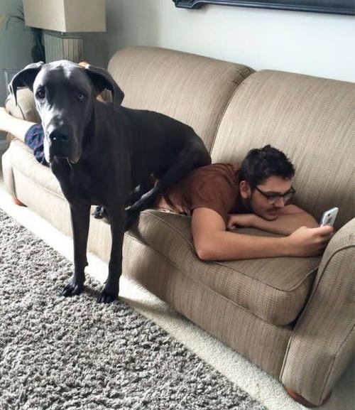 巨大な犬の画像(33枚目)