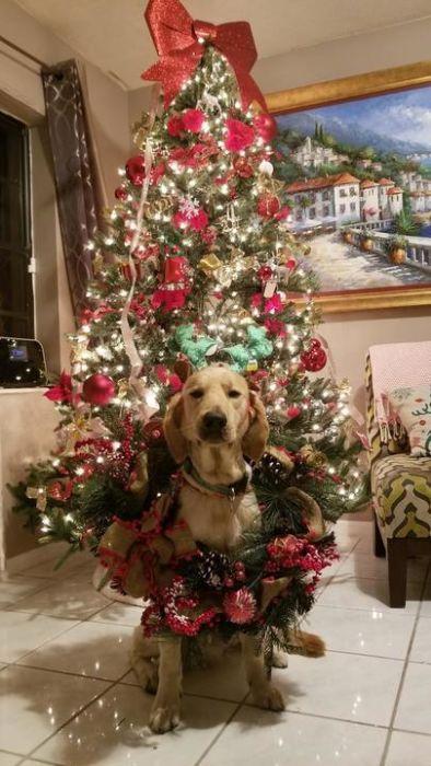 クリスマスのコスプレをした動物達の画像(23枚目)