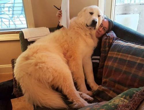 巨大な犬の画像(28枚目)