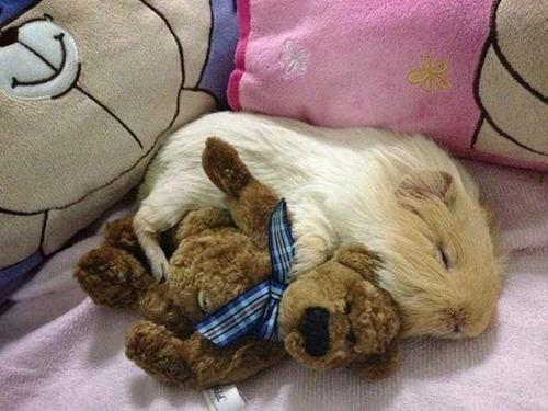 可愛く眠っている動物達の画像(26枚目)