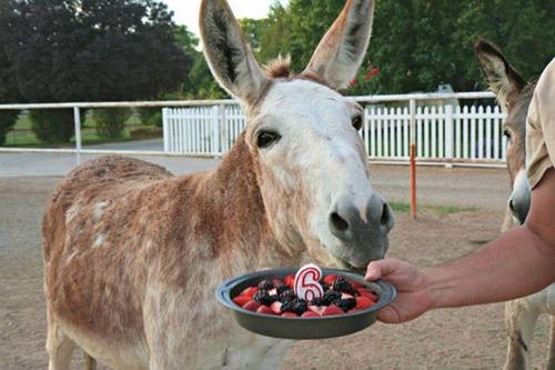 動物達の誕生日の写真の数々!!の画像(43枚目)