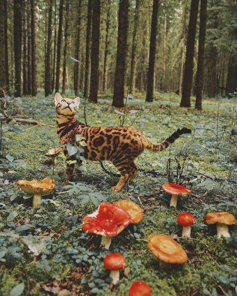 美しい風景と猫の画像(35枚目)