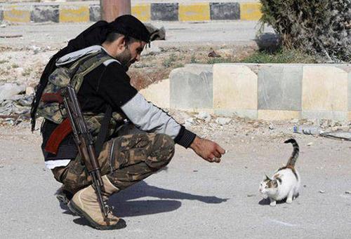 戦場にもネコは居る!!極限状態でも癒される戦場のネコの画像の数々!!の画像(31枚目)