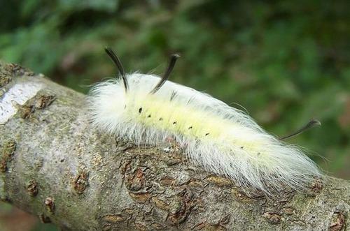 怪しすぎる見た目の昆虫の画像(35枚目)