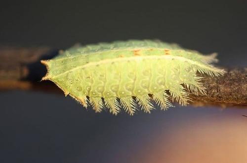 怪しすぎる見た目の昆虫の画像(31枚目)