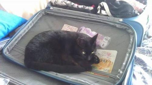 にゃんとも言えない、ちょっと困った猫の画像の数々!!の画像(39枚目)