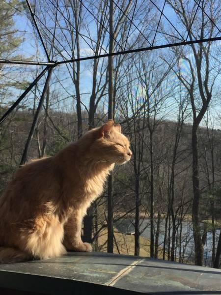 神々しい猫の画像(10枚目)