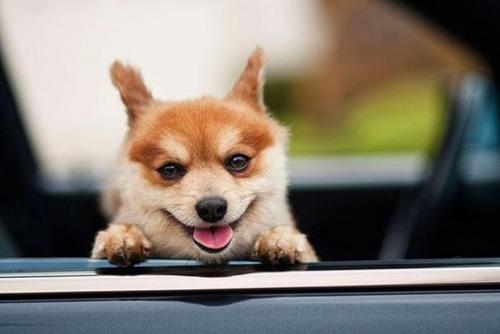幸せそうな表情の動物達の画像(24枚目)