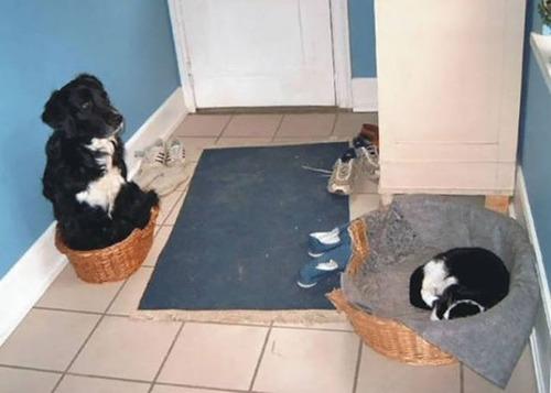 猫と犬の力関係の画像(5枚目)