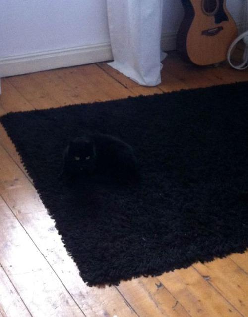 隠れているつもりの猫の画像(9枚目)