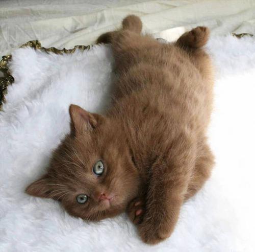 kittens_39