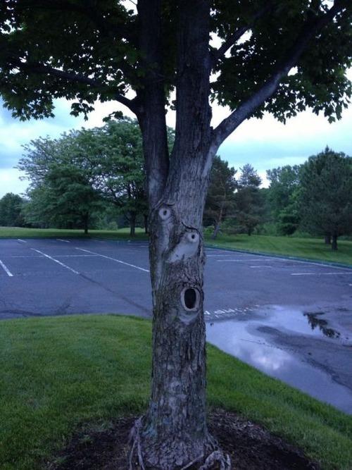 不気味な形の樹木の画像(15枚目)