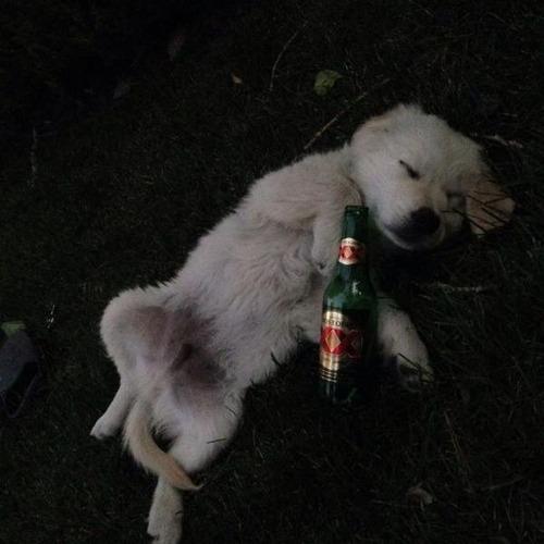 お酒大好き?お酒が好きそうな動物の画像の数々!!の画像(5枚目)