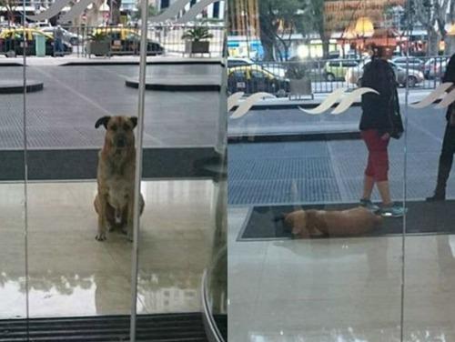 スチュワーデスさんに拾われた犬の画像(1枚目)