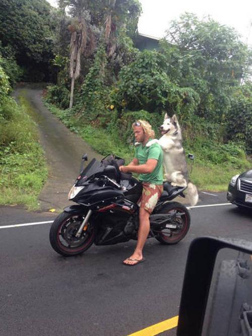 もはや職人技!?自動車やバイクで凄いものを運んでる画像の数々!!の画像(28枚目)