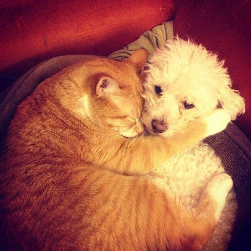 ほのぼのする!仲の良い犬と猫の画像の数々!!の画像(11枚目)