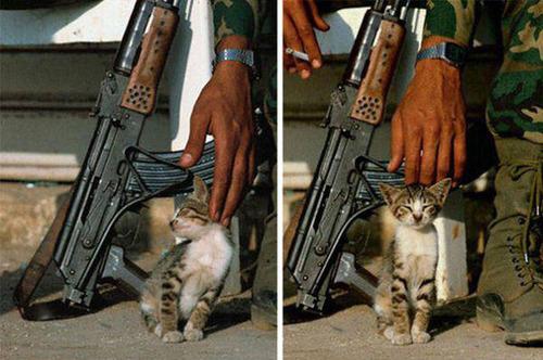 戦場にもネコは居る!!極限状態でも癒される戦場のネコの画像の数々!!の画像(30枚目)
