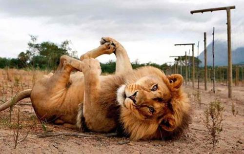 面倒くさい…疲れた…眠い…そんな感じの動物たちの画像!!の画像(7枚目)