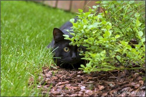 獲物を狙うかわいいネコの画像(14枚目)