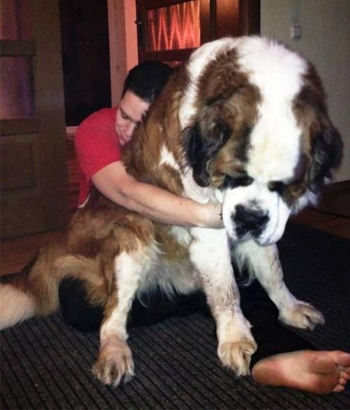 巨大な犬の画像(23枚目)
