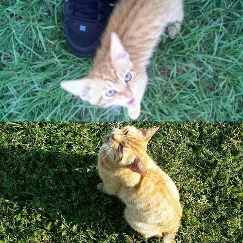 犬や猫の最初に撮った写真と最後に撮った写真の数々の画像(11枚目)