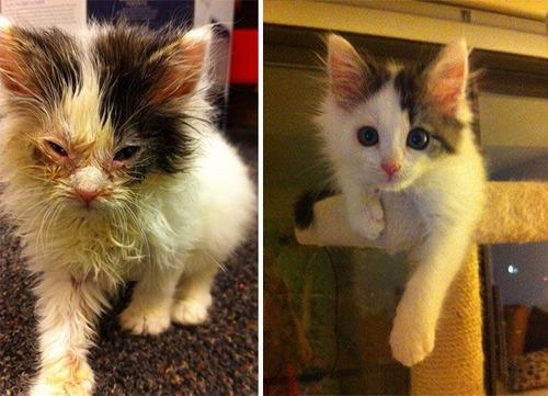 【画像】子汚い野良猫を拾って育てたら、こんなに可愛いニャンコになりましたよ!の画像(20枚目)
