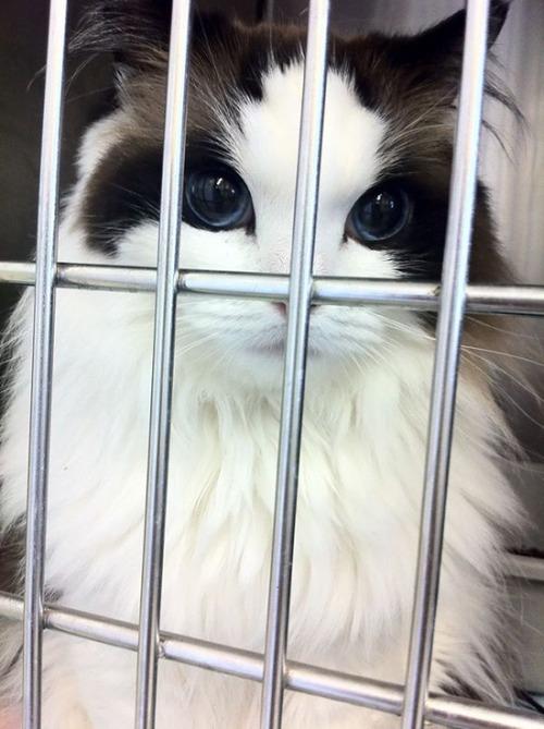 かわい過ぎる猫ちゃんの画像(11枚目)