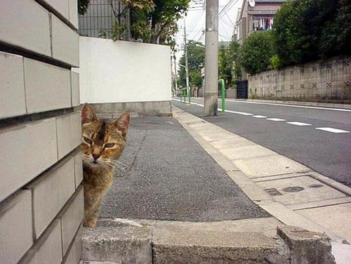 獲物を狙うかわいいネコの画像(2枚目)