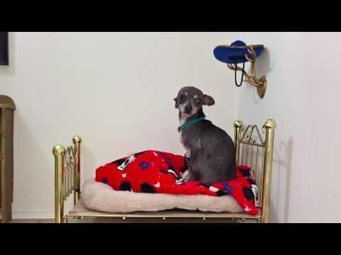 犬小屋の画像(1枚目)