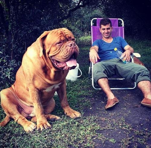 大きすぎる犬の画像(9枚目)