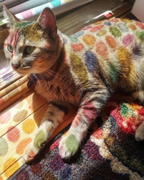 神々しい猫の画像(7枚目)