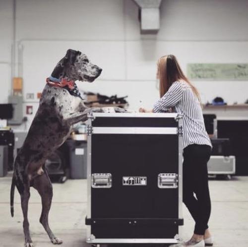 大きすぎる犬の画像(17枚目)