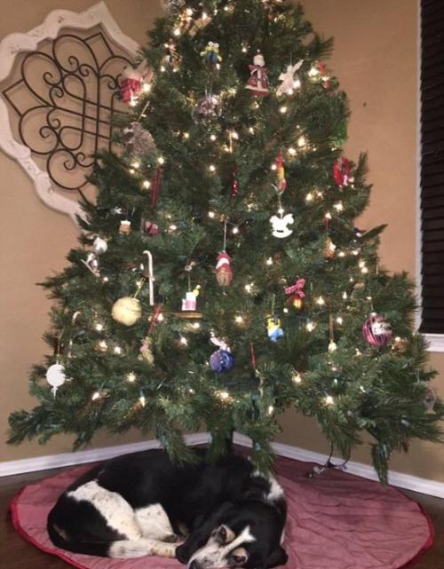 犬とクリスマスの画像(12枚目)