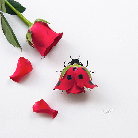本物の花で描いたアートが華やかで癒される!!の画像(4枚目)