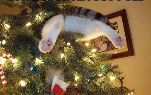 なぜ猫は狭いところが好きなのか??挟まっている猫の画像の数々wwwの画像(14枚目)