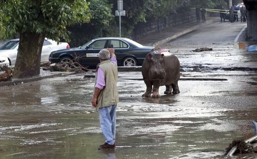 洪水で動物達が大脱走した時の写真の数々wwの画像(10枚目)