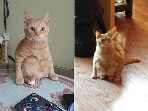 猫が座っているの画像(5枚目)