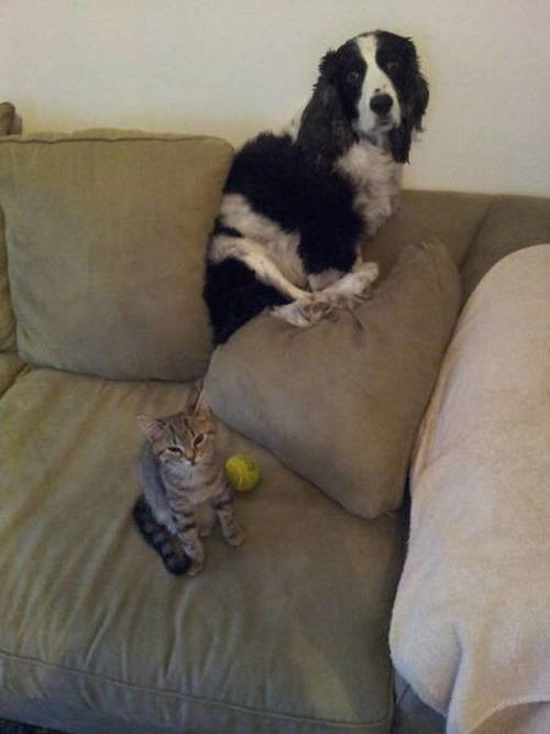 猫と犬の力関係の画像(18枚目)