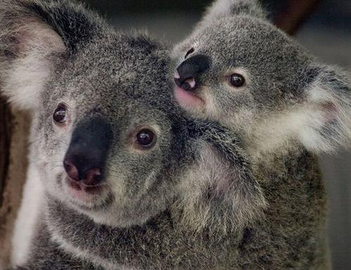 色々な動物の親子の癒される画像の数々!!の画像(19枚目)