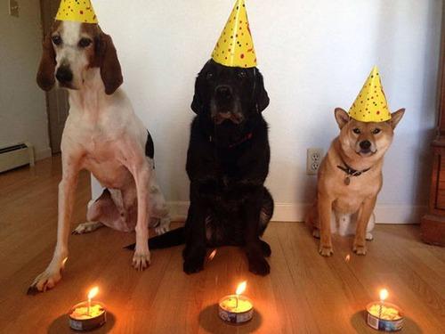 動物達の誕生日の写真の数々!!の画像(14枚目)