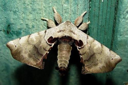 怪しすぎる見た目の昆虫の画像(36枚目)