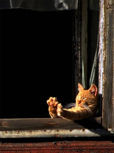 神々しい猫の画像(50枚目)