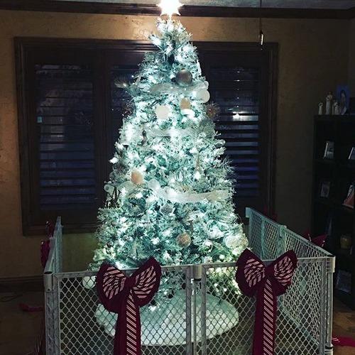 ペットと過ごすクリスマスの画像(9枚目)