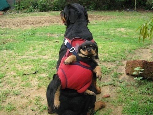 かわい過ぎる子犬の画像の数々!の画像(96枚目)