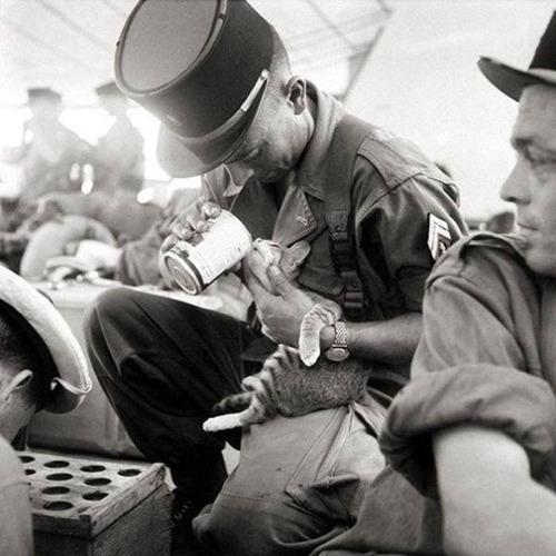 戦場にもネコは居る!!極限状態でも癒される戦場のネコの画像の数々!!の画像(2枚目)