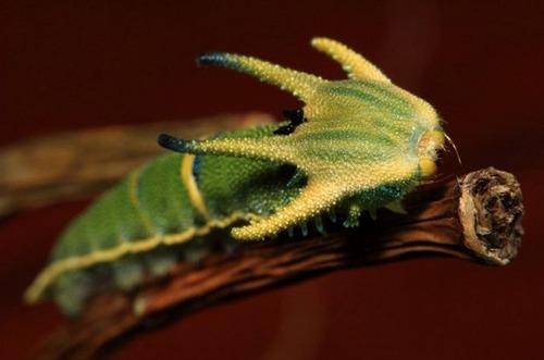 怪しすぎる見た目の昆虫の画像(9枚目)