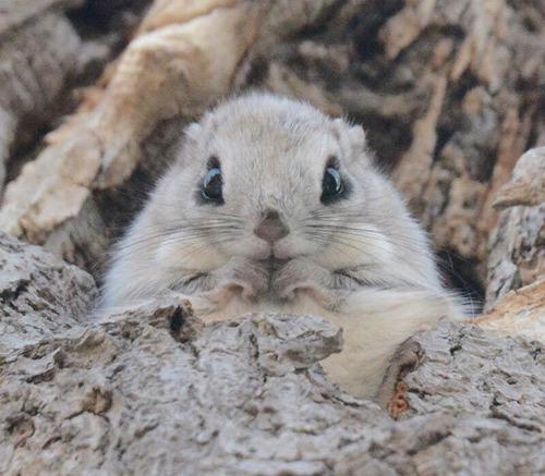 ほのぼのする野生の動物たちの画像の数々!の画像(6枚目)
