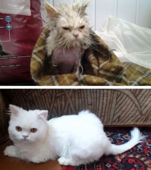 【画像】子汚い野良猫を拾って育てたら、こんなに可愛いニャンコになりましたよ!の画像(1枚目)