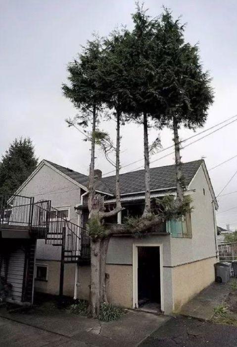 生えている樹木の画像(23枚目)